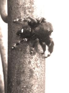Aracaphobia