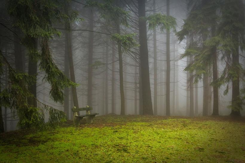 pine-273826_1920.jpg